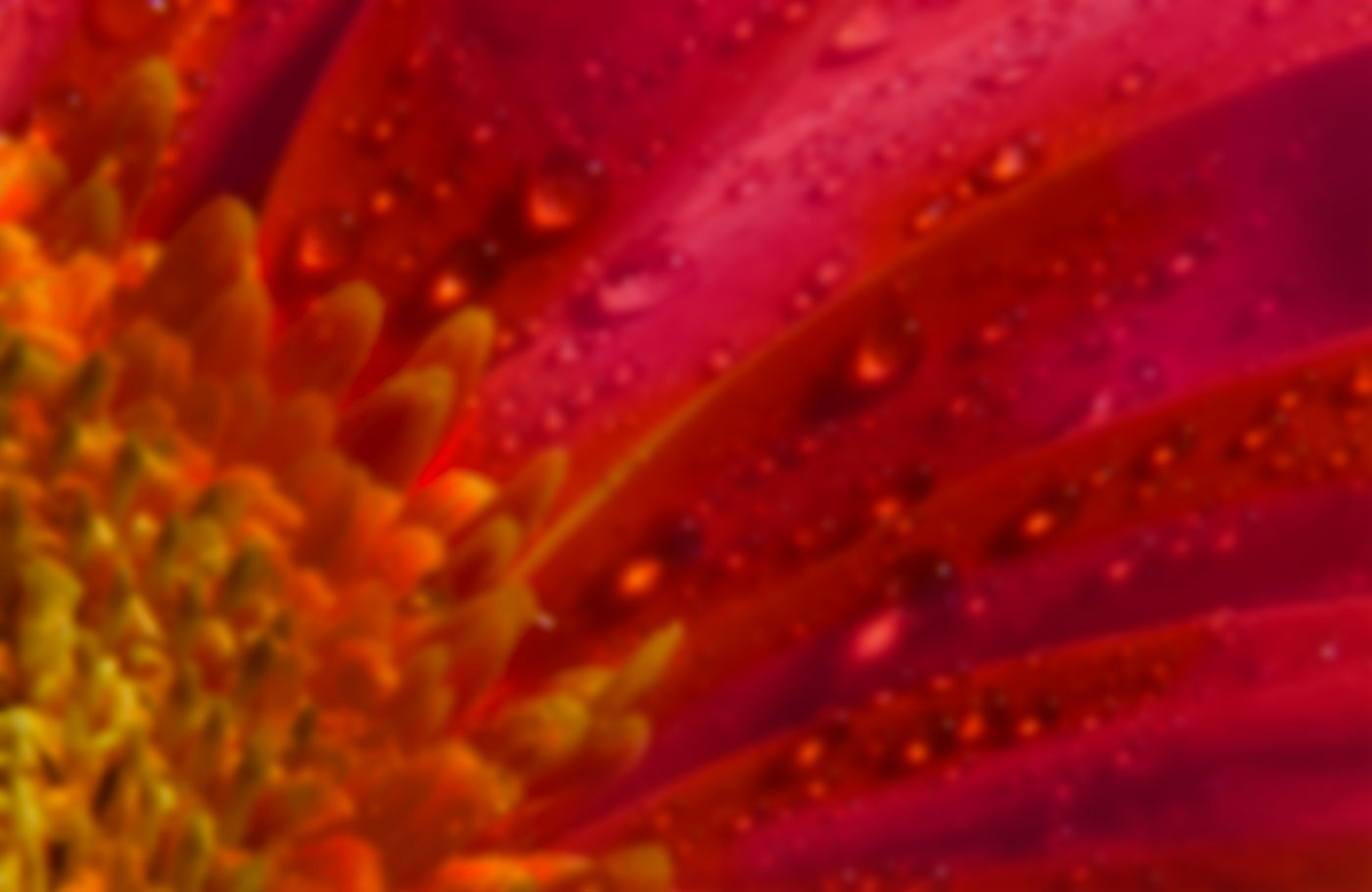 Macro photo of a red and orange flower.